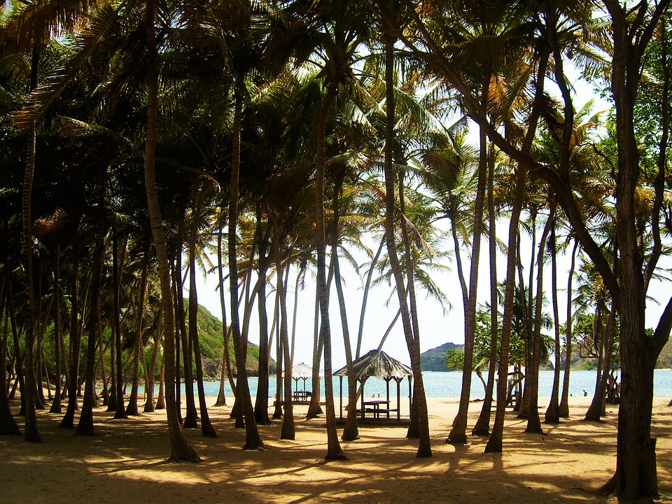 Explore the palm.lined beaches when sailing Guadeloupe