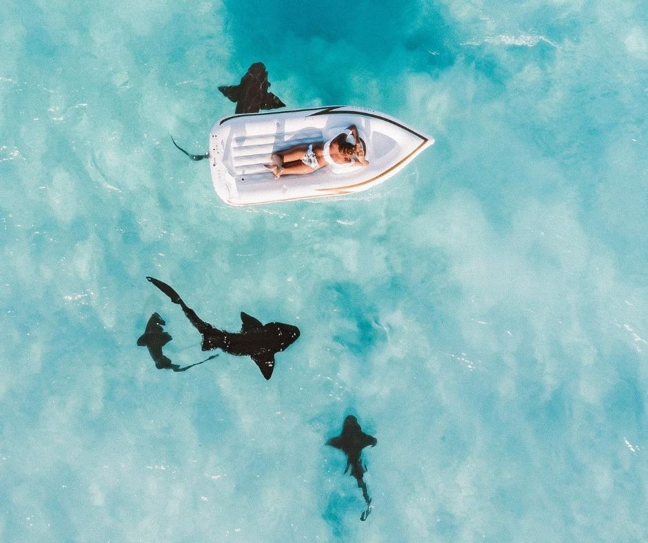Floating over nurse sharks in the Bahamas on Great Exuma.