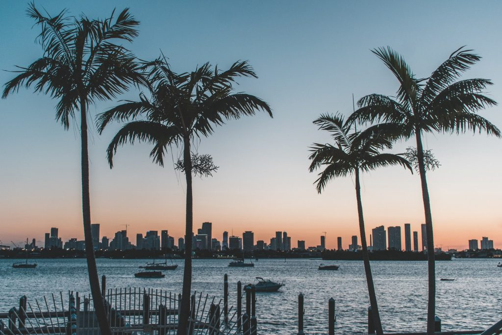 sunrise in Miami, palm trees, Miami skyline, boats, boating trips