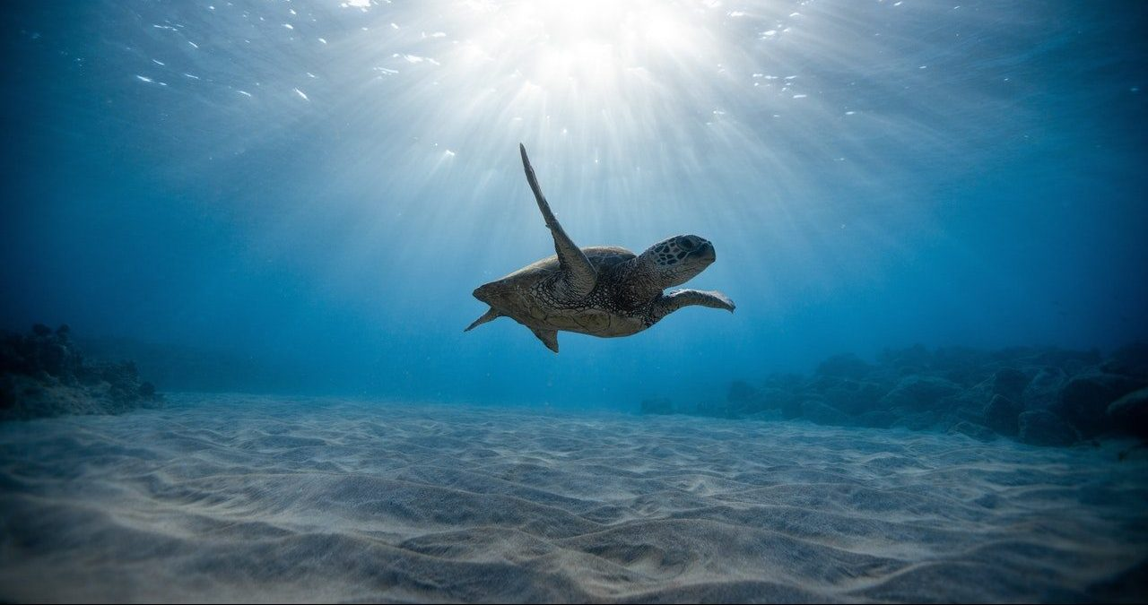 sea turtle in water, turquoise water, sand, sunlight, sun in water, underwater photograpy, marine life