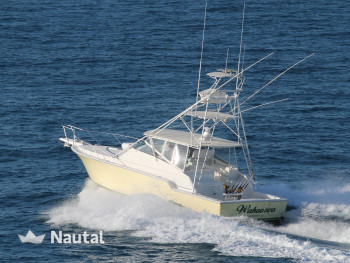 Fishing boat rent Bertram 43' Open Express in Turtle Cove Marina, Turks and Caicos